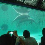 海洋博記念公園 ジュゴン2