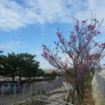 寒川緑地2