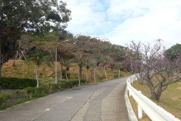 伊祖公園2